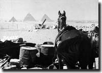 egypt, horse listening to the pyramids
